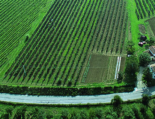 Albana vino di romagna e il suo territorio